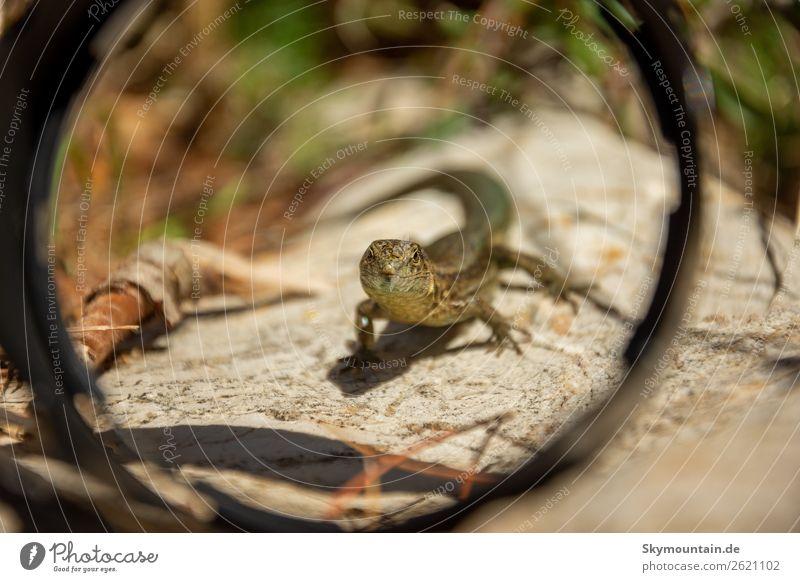 Kleiner Drache durch die Gegenlichtblende eingerahmt Kunst Umwelt Natur Landschaft Pflanze Tier Wildtier Tiergesicht Schuppen 1 nachhaltig Umweltverschmutzung