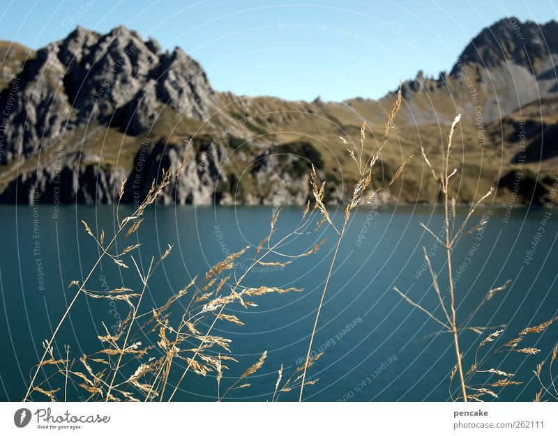 seegras Umwelt Natur Landschaft Pflanze Urelemente Wasser Himmel Wolkenloser Himmel Herbst Schönes Wetter Sträucher Wildpflanze Felsen Alpen Berge u. Gebirge
