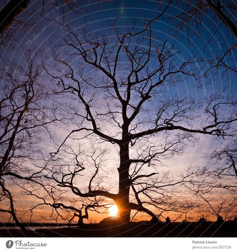Slow down Himmel Natur blau Baum Pflanze Sonne Wolken Wald Umwelt Leben Landschaft Freiheit Erde Luft Stimmung Wetter