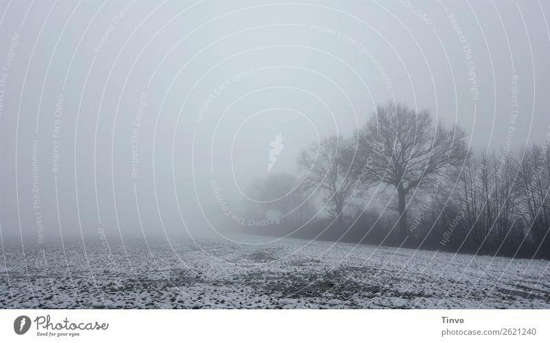 Winterliche Nebellandschaft mit Bäumen am Feldrand Natur Landschaft Schnee Baum Wiese grau ruhig stagnierend Frost ländlich winterlich geisterhaft nebelig