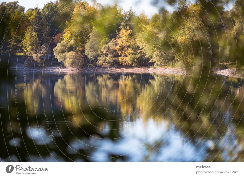 herbstliche Bäume mit Spiegelung am See Natur Landschaft Wasser Himmel Wolken Sonnenlicht Herbst Schönes Wetter Pflanze Baum Sträucher Grünpflanze Wildpflanze