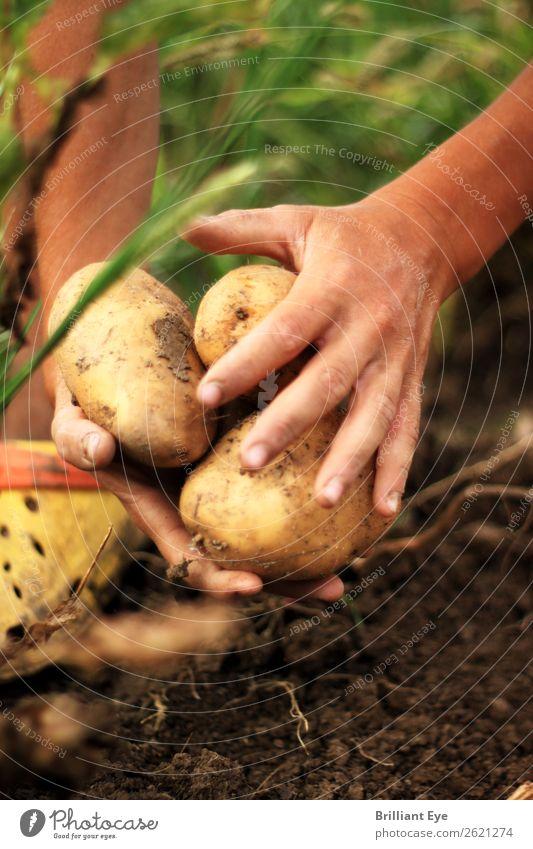 Kartoffeln einsammeln Gemüse Ernährung Gartenarbeit Landwirt Feld Landwirtschaft Forstwirtschaft Mensch maskulin Hand 1 18-30 Jahre Jugendliche Erwachsene Natur