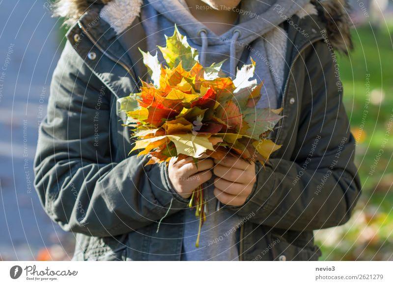 Buntes Herbstlaub Mensch feminin Junge Frau Jugendliche Erwachsene Körper 1 18-30 Jahre bescheiden Klima nachhaltig Umwelt Umweltschutz herbstlich Hand Blatt