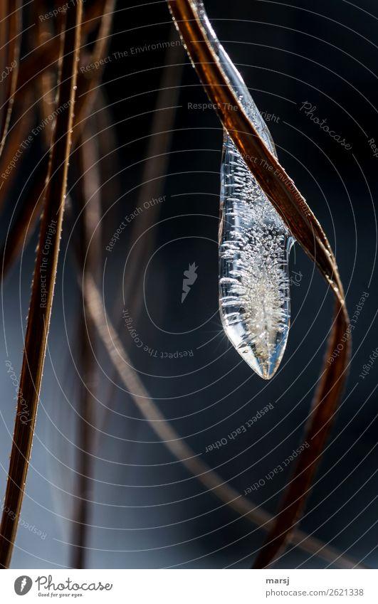 Eiszäpfchen mit Sonnenstern Winter Frost Eiszapfen kalt gefroren Luftblase Vergänglichkeit Farbfoto Gedeckte Farben Außenaufnahme Makroaufnahme abstrakt Muster