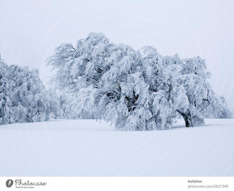 Schnee-Baum Himmel Ferien & Urlaub & Reisen Natur blau Landschaft weiß Einsamkeit Wald Winter Ferne Berge u. Gebirge natürlich Wiese Bewegung