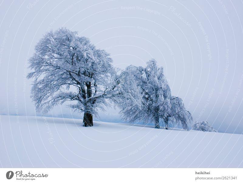 Wintertrees Himmel Ferien & Urlaub & Reisen Natur Pflanze Landschaft Baum Wolken Ferne Berge u. Gebirge Schnee Sport Tourismus Freiheit Ausflug Freizeit & Hobby