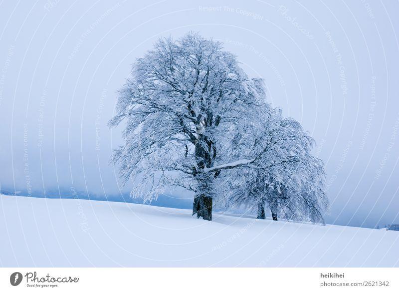 Winterstimmung im Schwarzwald Baum Winterurlaub Schnee Frost Eis Natur Außenaufnahme Menschenleer kalt Farbfoto Landschaft Tag Umwelt weiß Wald Pflanze Klima