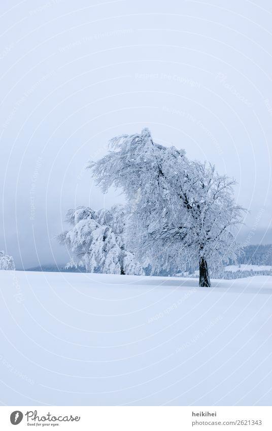 Unberührt - verschneite Bäume auf dem Schauinsland Himmel Ferien & Urlaub & Reisen Pflanze Landschaft Baum Erholung Wald Winter Ferne Berge u. Gebirge Schnee