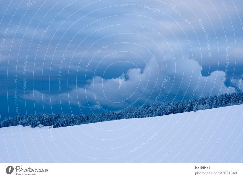 Winter- und Abendstimmung im Schwarzwald winterlich Schnee kalt Natur Frost Eis gefroren Kristallstrukturen blau Eiskristall frieren Raureif Außenaufnahme weiß