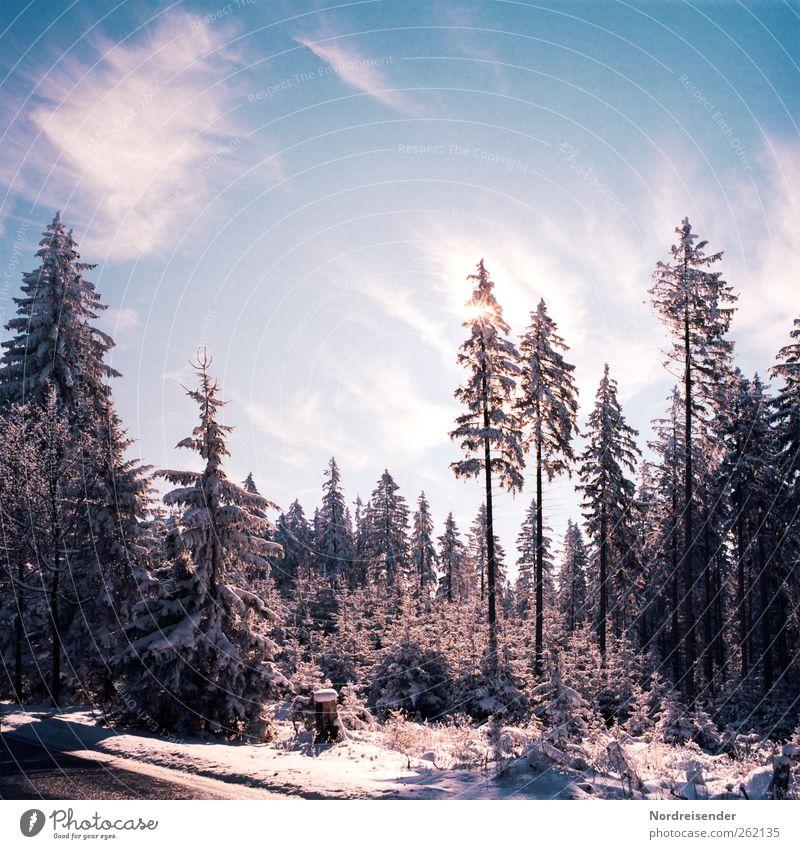 Spätwinterlich t II Natur blau weiß Pflanze Sonne Winter Wolken ruhig Wald Erholung Straße Landschaft Schnee Eis glänzend Klima