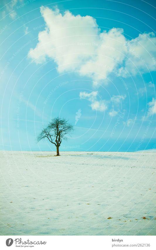 Stille Himmel Natur blau Baum Winter Wolken Einsamkeit ruhig Wiese Landschaft kalt Schnee Horizont natürlich ästhetisch authentisch