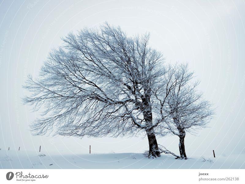 Wind Natur Winter Wetter Nebel Eis Frost Schnee Baum Feld Unendlichkeit hell grau schwarz weiß kalt Windflüchter Buche Schauinsland Farbfoto Gedeckte Farben