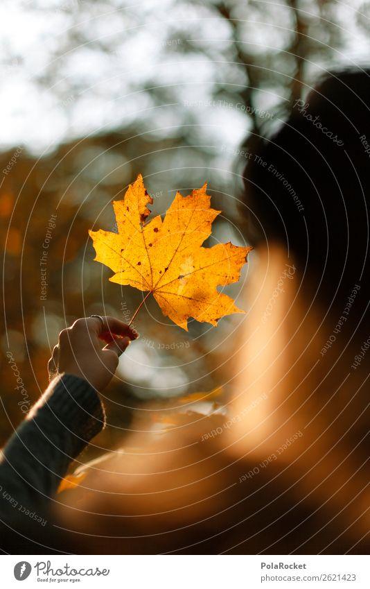 #A# HerbstBlick Umwelt Natur ästhetisch Ahorn Ahornblatt herbstlich Herbstlaub Herbstfärbung Herbstbeginn Herbstwald Herbstwetter Herbstlandschaft Herbststurm