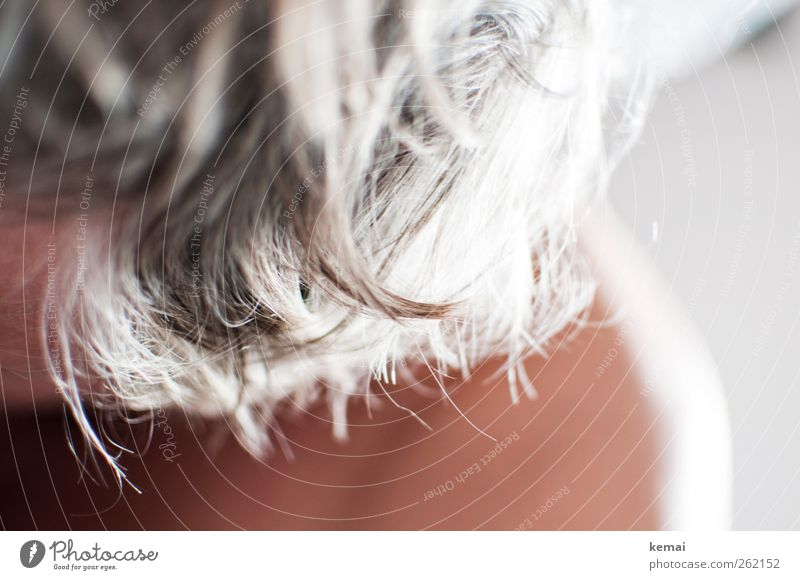 Graues Haar Mensch alt Erwachsene Leben grau Kopf Haare & Frisuren Haut maskulin 45-60 Jahre kurzhaarig grauhaarig
