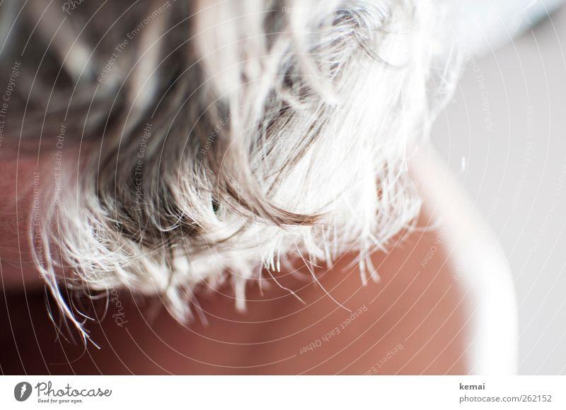 Graues Haar Mensch maskulin Erwachsene Leben Haut Kopf Haare & Frisuren 1 45-60 Jahre grauhaarig kurzhaarig alt älter werden Farbfoto Gedeckte Farben