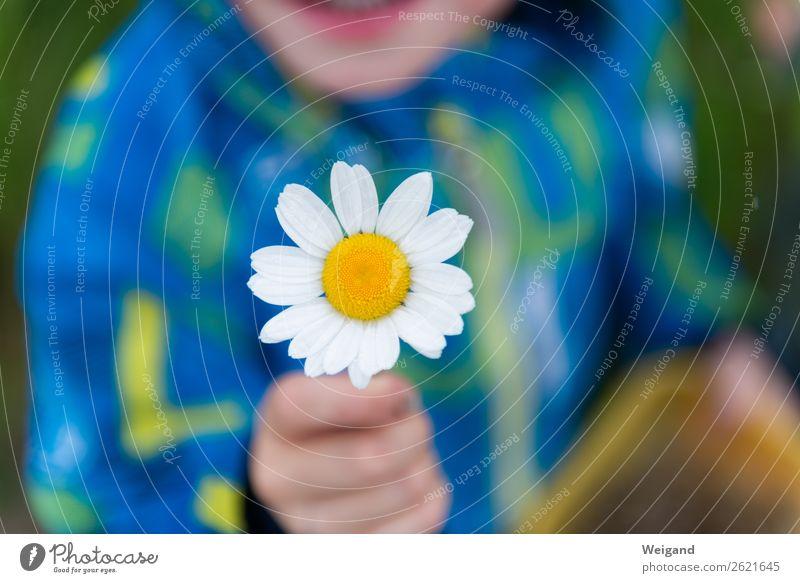 Muttertag Kindergarten Kleinkind Mädchen Junge Kindheit 1 Mensch Liebe Zusammensein Menschlichkeit Solidarität Hilfsbereitschaft trösten dankbar Traurigkeit