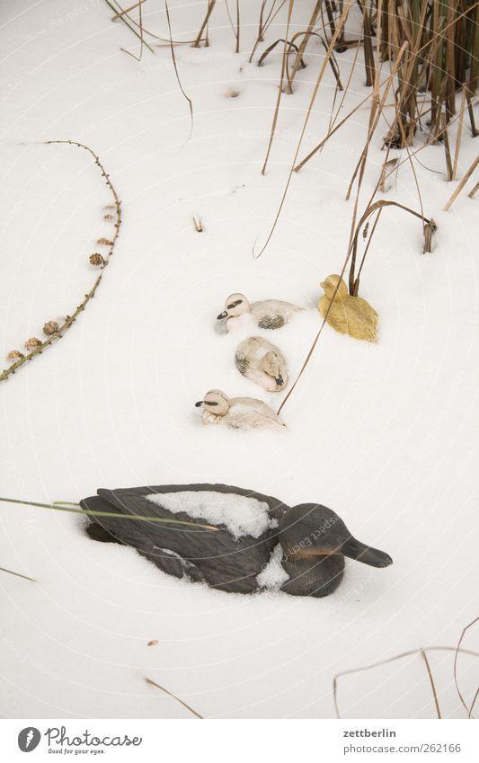 Enten Tier Garten Kunst Vogel Eis Freizeit & Hobby Häusliches Leben Dekoration & Verzierung gut Schilfrohr Ente Skulptur Teich Ton Küken Riedgras