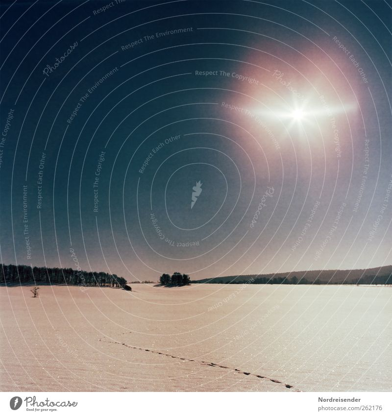 Rauschen.... harmonisch Erholung ruhig Meditation Winter Schnee Winterurlaub Urelemente Sonne Schönes Wetter Feld Wald Fährte verrückt Beginn Einsamkeit