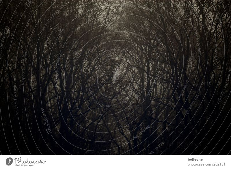 Düsterwald I Natur alt Baum Pflanze Winter schwarz Wald Umwelt Landschaft dunkel Tod Herbst Gefühle Holz Traurigkeit braun