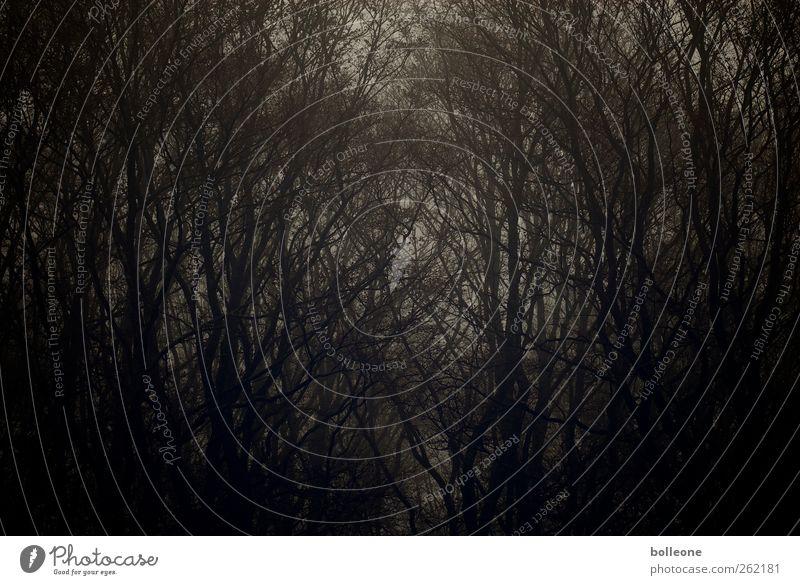 Düsterwald I Umwelt Natur Landschaft Pflanze Herbst Winter Wetter Nebel Baum Wald Holz alt ästhetisch bedrohlich dunkel natürlich braun schwarz Gefühle Stimmung