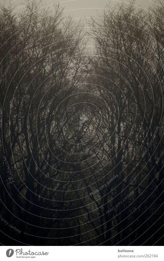 Düsterwald II Umwelt Natur Landschaft Tier Herbst Winter Nebel Baum Wald Holz alt bedrohlich dunkel braun schwarz Gefühle Stimmung Traurigkeit Trauer Einsamkeit