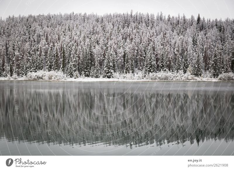 kälter Natur Landschaft Pflanze Winter Nadelbäume Tanne Fichte Wald Seeufer kalt weiß ruhig Klima Symmetrie Ferien & Urlaub & Reisen Kanada Winterwald