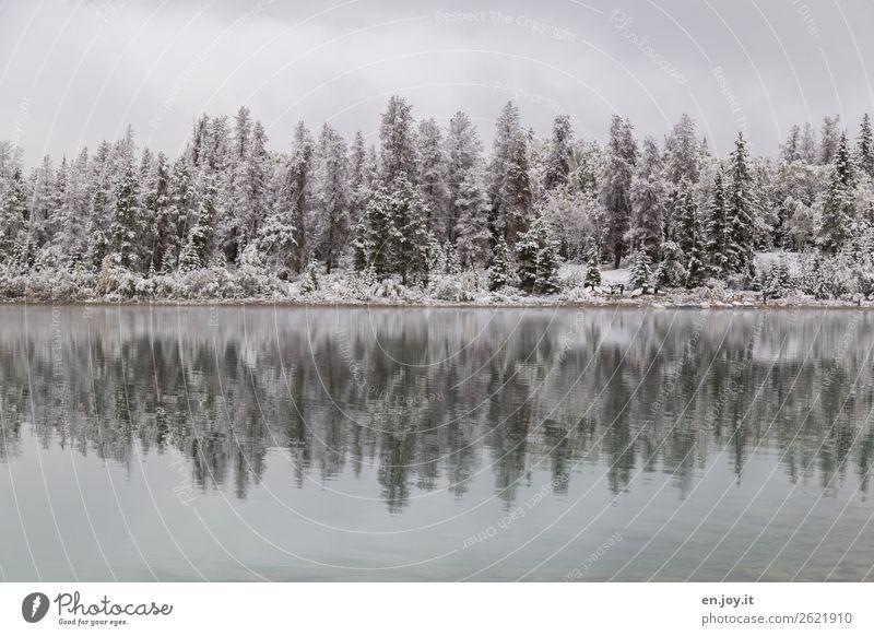 verschneit Ferien & Urlaub & Reisen Ausflug Winter Schnee Winterurlaub Natur Landschaft Eis Frost Wald Seeufer weiß ruhig Idylle kalt Klima Symmetrie Trauer