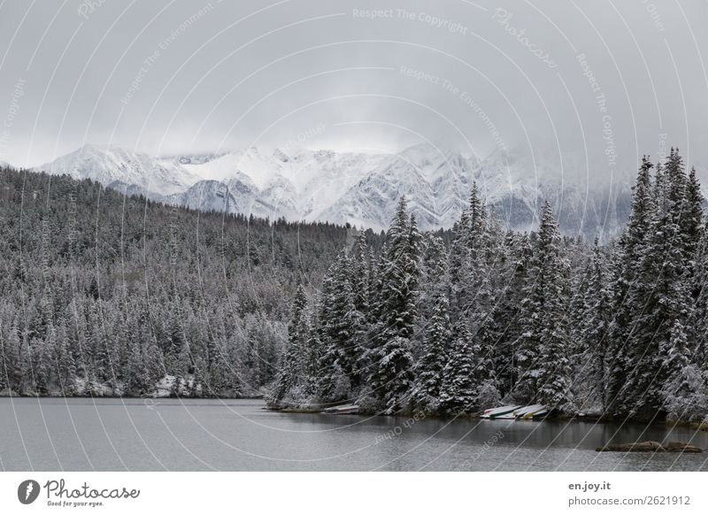 es lichtet sich Ferien & Urlaub & Reisen Ausflug Winter Schnee Winterurlaub Berge u. Gebirge Natur Landschaft schlechtes Wetter Nebel Wald Schneebedeckte Gipfel