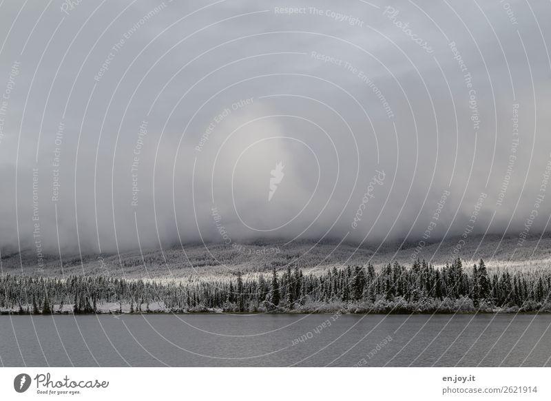 noch einmal Schnee Ferien & Urlaub & Reisen Ausflug Ferne Winter Winterurlaub Natur Landschaft Wolken Sonnenlicht Klima Wetter Nebel Eis Frost Wald Seeufer