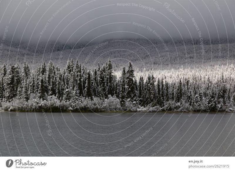 Überraschung | die Sonne kommt raus Ferien & Urlaub & Reisen Ausflug Winter Schnee Winterurlaub Natur Landschaft Sonnenlicht Nebel Wald Hügel See kalt Hoffnung