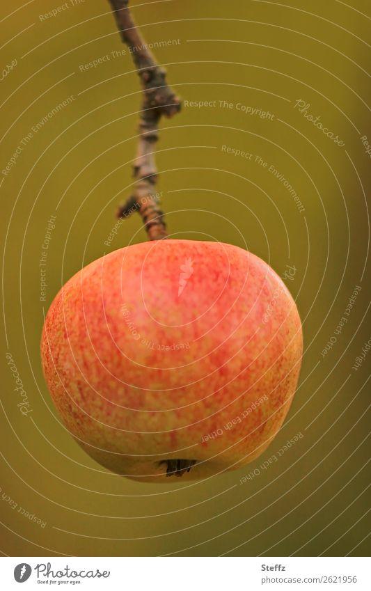 Ein Apfel am Tag IV Lebensmittel Frucht Bioprodukte Vegetarische Ernährung Diät Fasten Vegane Ernährung Gesunde Ernährung Natur Herbst Zweig Garten hängen