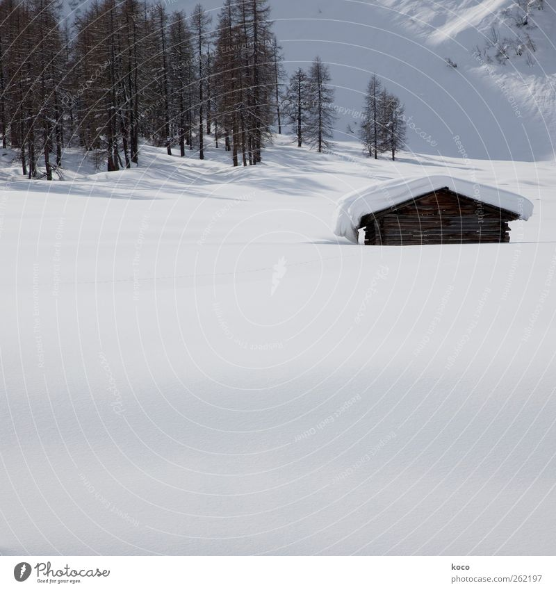 Hütte im Schnee Natur alt weiß schön Baum Winter schwarz Einsamkeit Haus ruhig Wald Landschaft Berge u. Gebirge Holz grau