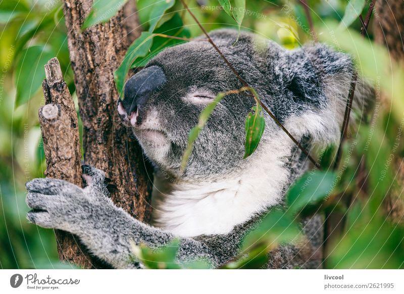 Ferien & Urlaub & Reisen Natur Baum Einsamkeit Tier Wald Gefühle Familie & Verwandtschaft Menschengruppe grau Ausflug Zufriedenheit träumen Abenteuer niedlich