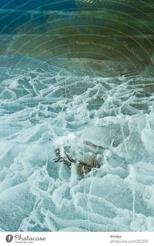 Faszination Eis Natur Wasser Winter Klima Frost Seeufer Teich ästhetisch außergewöhnlich kalt natürlich Kreativität Muster Linie bizarr schön mehrfarbig