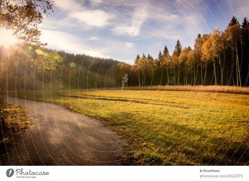 Herbsttage harmonisch Wohlgefühl Erholung Ausflug Freiheit Sonne wandern Himmel Schönes Wetter Blatt Wald Menschenleer beobachten entdecken gehen genießen