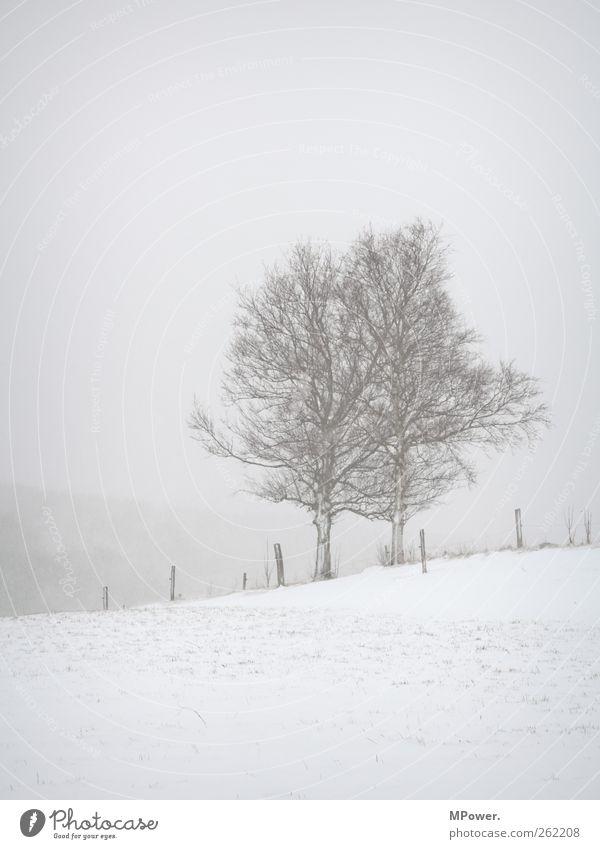 grau in grau weiß Baum Winter Einsamkeit Schnee Schneefall Abenteuer Kraft Hoffnung trist Hügel Unendlichkeit gruselig Zaun Müdigkeit