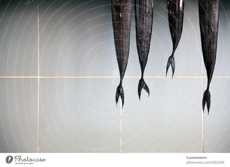 danse macabre Tier schwarz Ernährung Wand Lebensmittel frisch Fisch trist Spitze dünn lang fangen gruselig Fliesen u. Kacheln lecker