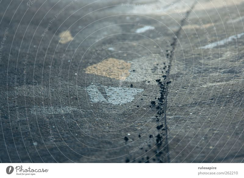 Spuren im Eis #7 blau Winter kalt grau Küste Eis Zufriedenheit elegant Klima Frost Spuren Konzentration Ostsee Willensstärke Wintersport Genauigkeit