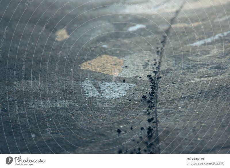 Spuren im Eis #7 Winter Wintersport Frost Küste Ostsee elegant blau grau Willensstärke Genauigkeit Zufriedenheit kalt Klima Konzentration Präzision