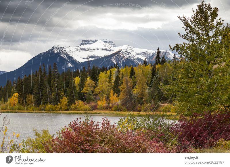 herbstlich Ferien & Urlaub & Reisen Berge u. Gebirge Natur Landschaft Pflanze Wolken Herbst Baum Sträucher Wald Hügel Rocky Mountains Schneebedeckte Gipfel
