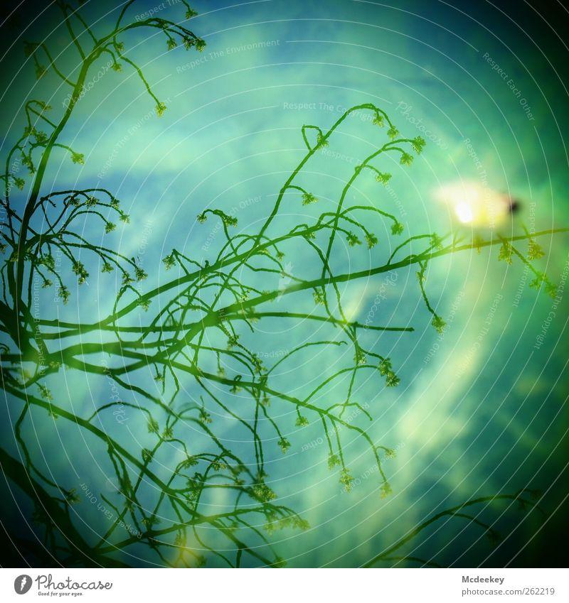 Nasser Spiegel der Hoffnung blau Wasser weiß grün Baum Pflanze Sommer schwarz gelb Umwelt Landschaft grau Blüte Park nass natürlich