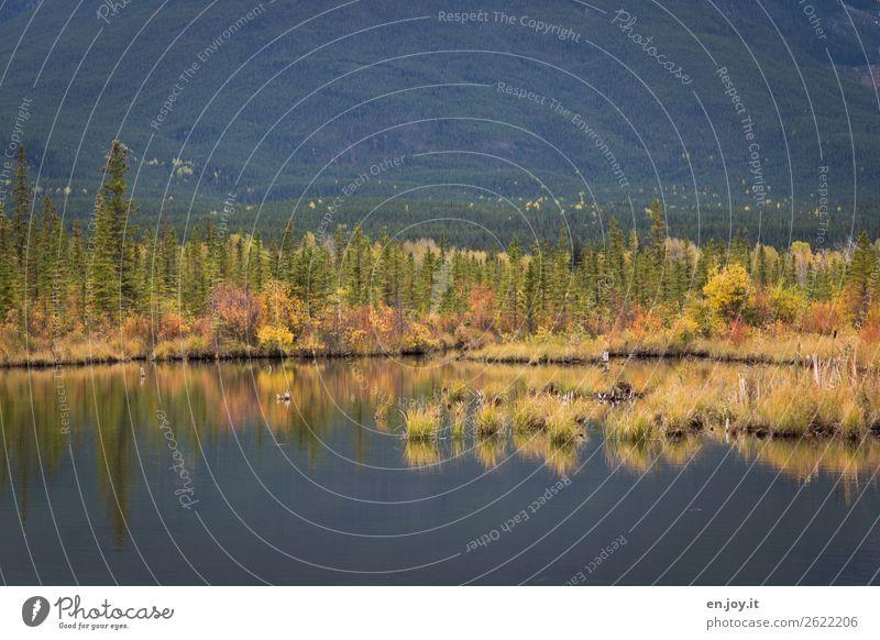 Seeufer Ferien & Urlaub & Reisen Ausflug Umwelt Natur Landschaft Pflanze Herbst Gras Sträucher Wald Vermilion Lake wild Erholung Idylle ruhig Kanada