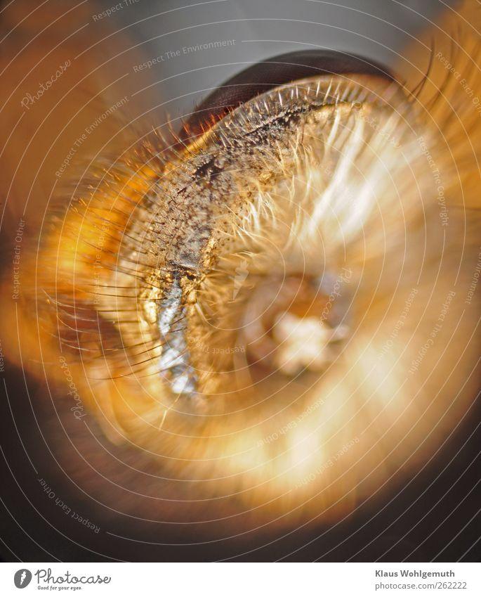 Mescalintripp Totes Tier Fliege Tiergesicht 1 ästhetisch gruselig hässlich braun gold grau Mikroskop Mikroaufnahme Mikrofotografie Auge Facettenauge Hals