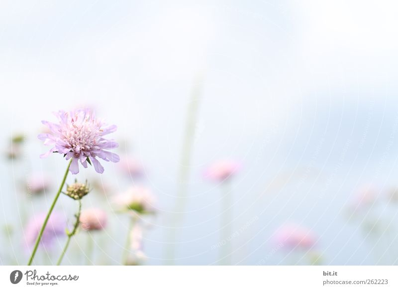 Frühlingsbote... Sinnesorgane Erholung ruhig Meditation Valentinstag Muttertag Hochzeit Geburtstag Taufe Pflanze Himmel Sommer Blume Blüte Wiese hell rosa