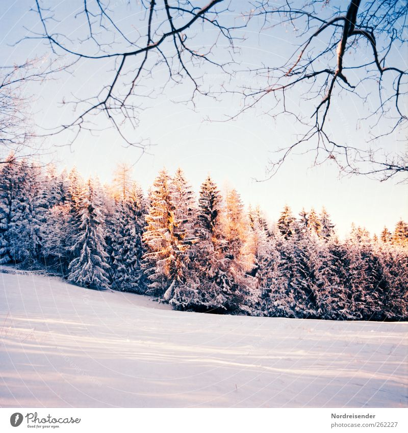 Spätwinterlich t III Ferien & Urlaub & Reisen Pflanze Sonne Winter ruhig Wald Leben Landschaft Schnee Feld Freizeit & Hobby elegant Klima frisch ästhetisch Hoffnung