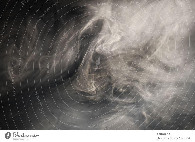 Dunstkreis Natur Luft Sonnenlicht Nebel Menschenleer Bewegung entdecken leuchten Rauchen ästhetisch bedrohlich Coolness dunkel Unendlichkeit gruselig hell kalt