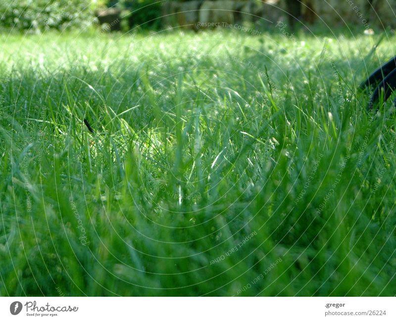 Gras grün Sommer Wiese