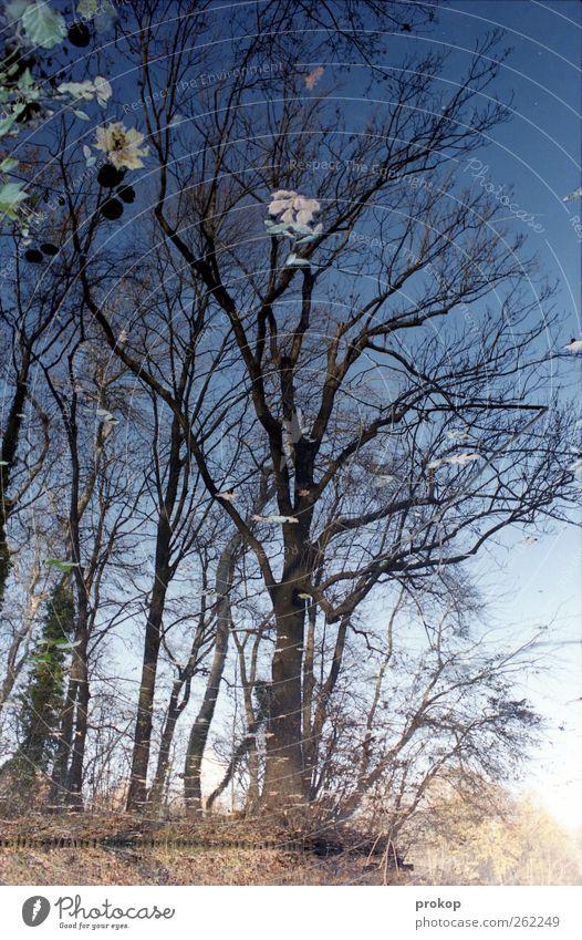 Baum mit Blüten Umwelt Natur Landschaft Pflanze Himmel Wolkenloser Himmel Herbst Schönes Wetter Blatt Park Seeufer Teich Kraft Warmherzigkeit Vorsicht geduldig