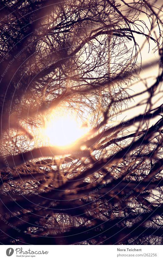 Zwiespalt Natur schön Baum Pflanze Sonne Winter Wald Umwelt Landschaft Herbst Gefühle Freiheit Glück Garten Erde träumen