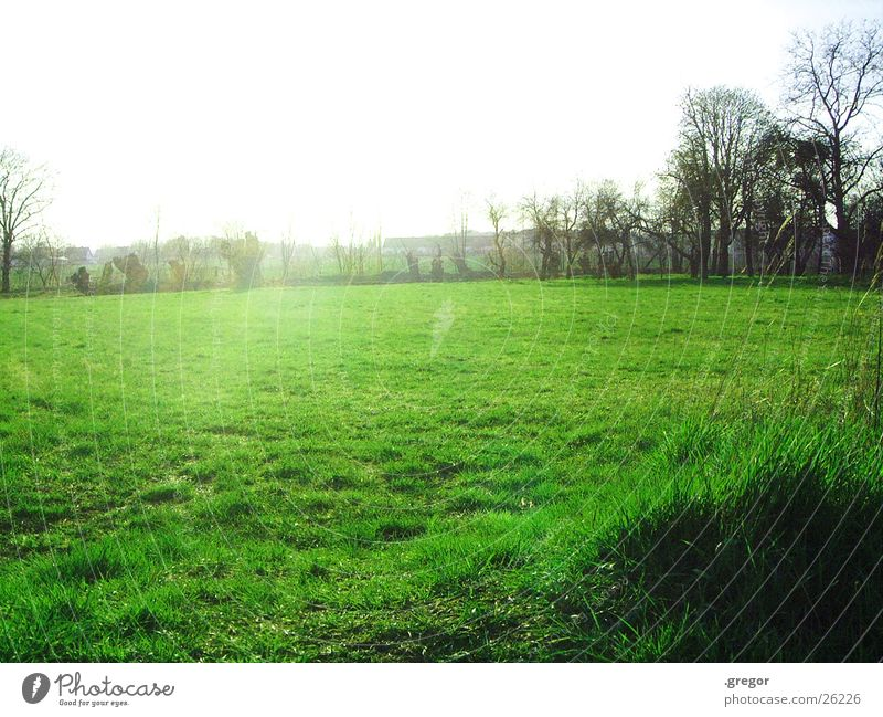 das feld ist grün Baum Sonne Feld blenden